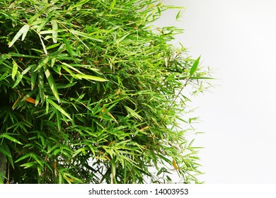 bamboo with rockery