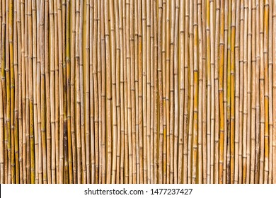 Bamboo row fence made of yellow bamboo