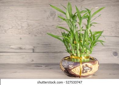 Bamboo ( sepia )