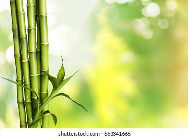 Bamboo shoot.
