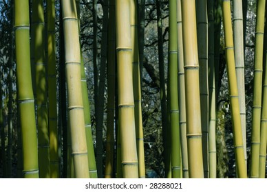 Bamboo Shoots, dark green through yellow and brown make up this natural background.