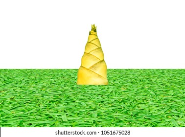 Bamboo shoots on green grass background