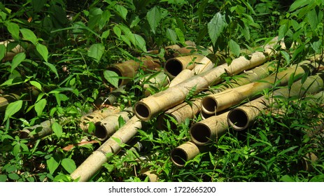 Bamboo Shoots Piled in the Forest