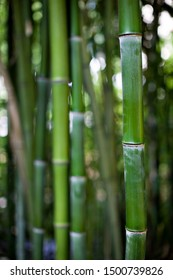 Bamboo shoots in the summer