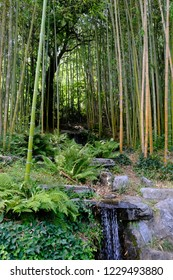 Bamboo and a small waterfall in the garden of Villa Carlotta in Italy
