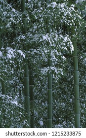 Bamboo and snow