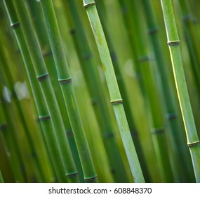 bamboo sqaure