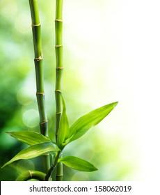 bamboo stalks and light beam