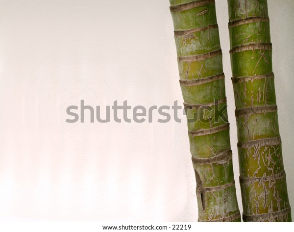 Bamboo stalks with negative space for text or...