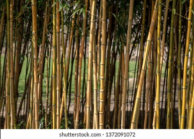 Bamboo sticks of a hedge