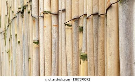Bamboo sticks tied up, close up