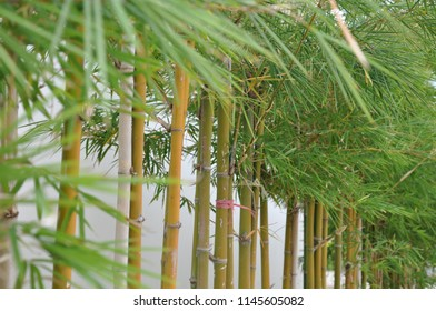Bamboo structure fence