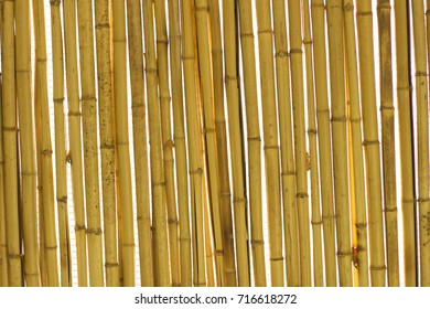 bamboo for sukkah