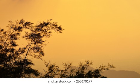 bamboo with sunset sky background on Khao Wongphrachan mountain in Thailand