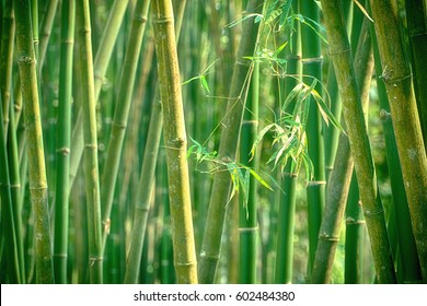 Bamboo tree with bokeh background