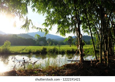 Bamboo tree and Fish pond in rice farm of Northern Thailand