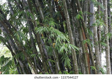 bamboo tree and greenleaf