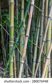 Bamboo is a tribe of flowering perennial evergreen plants in the grass family Poaceae