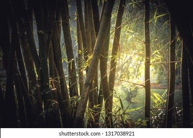 Bamboo tropical rainforest background with enlightenment sunlight through lush foliage vintage style