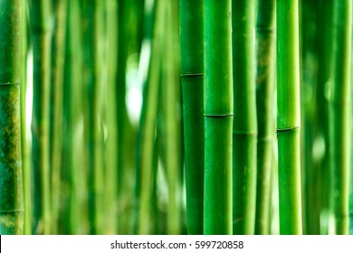 Bamboo trunk background, natural background of Asian forest