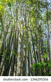 Bamboo trunk in nature forest