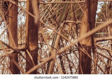 bamboo vintage wallpapper