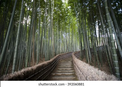 Bamboo walk Adashino Nembutsu-ji Temple, Kyoto, Japan with steps leading up to the temple through a cultivated plantation of bamboo, a popular tourist destination