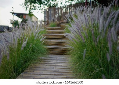 Bamboo walkway in the garden.