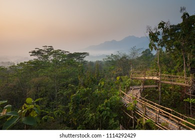 Bamboo walkway in the jungles of central Java, Indonesia