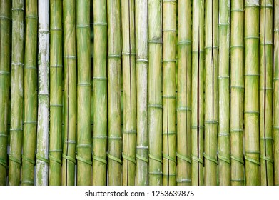 Bamboo wall colored in green