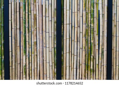 Bamboo wall or bamboo fence with black steel structure texture background.