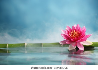 Bamboo and water lily reflected in a serenity pool