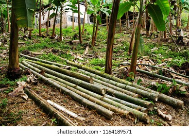 Bamboo wood deforestation