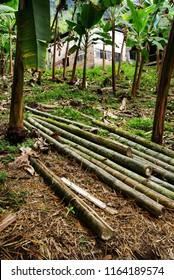 Bamboo wood deforestation