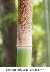 Bamboo wood in tropical forest - close up against blurry backgrounds