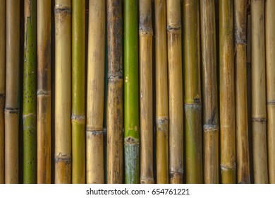 Bambu pattern Background
