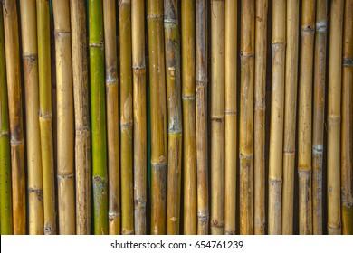Bambu pattern Background