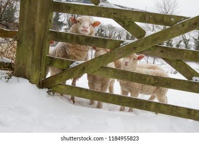 Bampton in the Snow