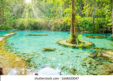 Ban Nam Rad watershed forest in Thailand, Surat Thani's Khiri Rat Nikhom district. has become a popular attraction