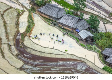 BAN PHUNG, VIETNAM - JUNE, 15, 2018: Rice fields on terraced. Fields are prepared for planting rice. Ha Giang. Huyen Hoang Su Phi. Northern Vietnam