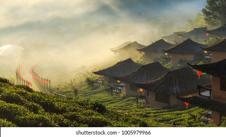 Ban Rak Thai, a Chinese settlement in tea field with fog in the morning, Mae Hong Son, Thailand