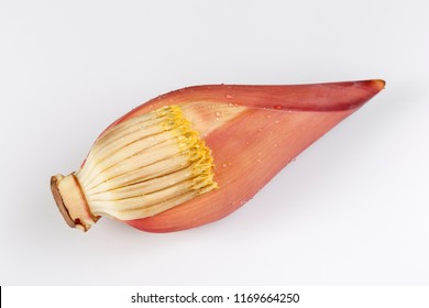 Banana blossom on white background. Head of this can be used instead of meat for cooking for people not to eat meat.