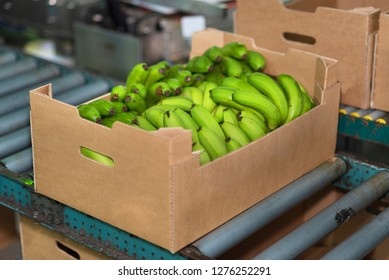 banana box full of ripe green banana in packaging chain .