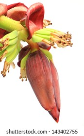 Banana flower blossom with little bananas isolated on white path ready.