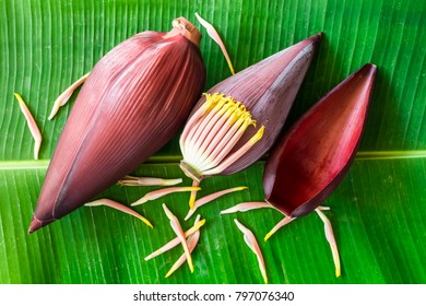 Banana flower blossom on the green leaf background. Selective focus.