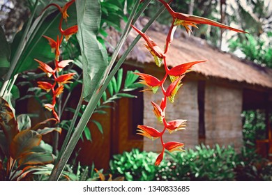 Banana flowers and Bamboo House, bungalow, from natural wood tree on the tropical island Bali, Indonesia