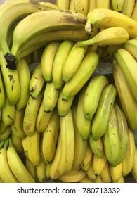 banana harvest. many bananas.