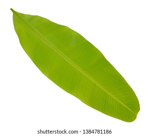 Banana leaf isolate on white background with clipping path included, Green banana leaf texture background