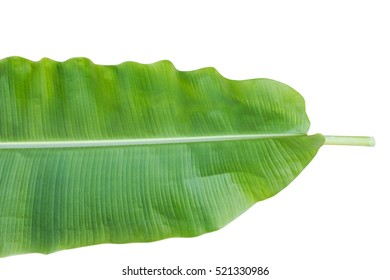 Banana Leaf Isolated On White / clipping path