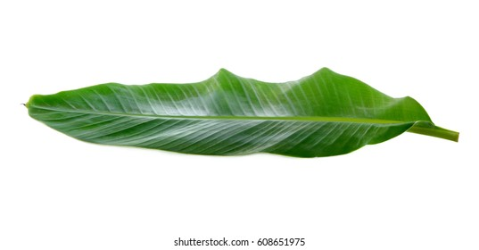 Banana Leaf isolated on white background